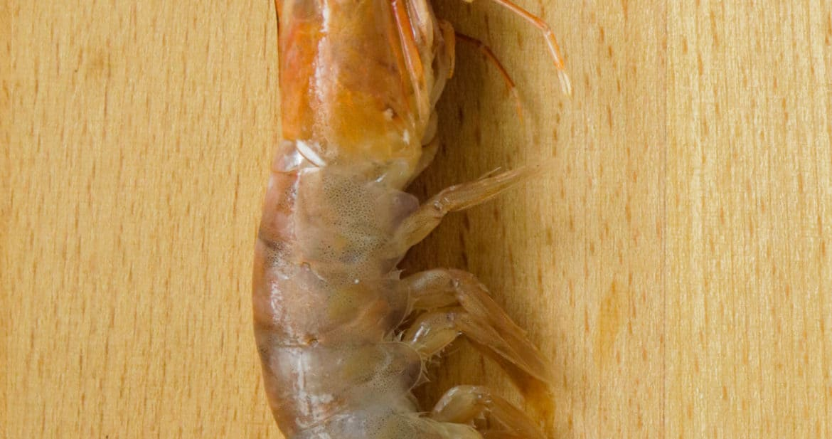 picture of shrimp. how to clean shrimp